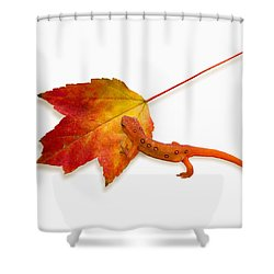 Red Spotted Newt Shower Curtain by Ron Jones