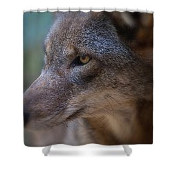 Red Wolf Stare Shower Curtain by Karol Livote