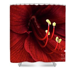 Ref Lily Shower Curtain by Carlos Caetano