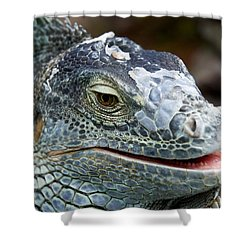 Rhinoceros Iguana Shower Curtain by Fabrizio Troiani
