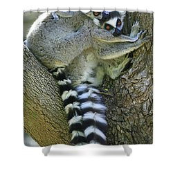 Ring-tailed Lemurs Madagascar Shower Curtain by Cyril Ruoso