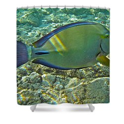 Ringtail Surgeonfish Shower Curtain by Michael Peychich