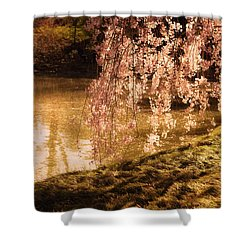 Romance - Sunlight Through Cherry Blossoms Shower Curtain by Vivienne Gucwa