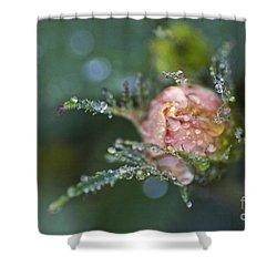 Rose Flower Series 9 Shower Curtain by Heiko Koehrer-Wagner