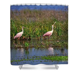 Roseate Spoonbills Shower Curtain by Louise Heusinkveld
