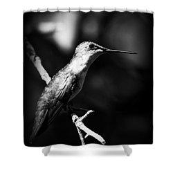 Ruby-throated Hummingbird - Signature Shower Curtain by Travis Truelove