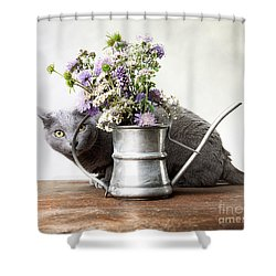 Russian Blue 03 Shower Curtain by Nailia Schwarz