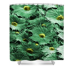 Russian Silverberry Leaf  Shower Curtain by Asa Thoresen and Photo Researchers