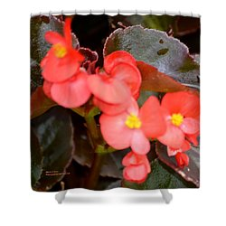Salmon Begonia Shower Curtain by Maria Urso