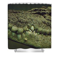 Saltwater Crocodile Teeth Shower Curtain by Cyril Ruoso