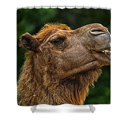 Say What Shower Curtain by Karol Livote