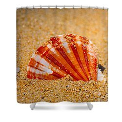 Scallop Shell Shower Curtain by Cheryl Young