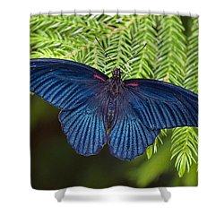 Scarlet Swallowtail Shower Curtain by Joann Vitali