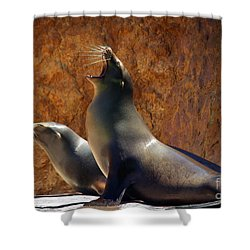 Sea Lions Shower Curtain by Carlos Caetano