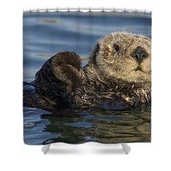Sea Otter Monterey Bay California Shower Curtain by Suzi Eszterhas