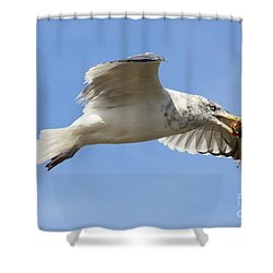 Seagull With Snail Shower Curtain by Carol Groenen