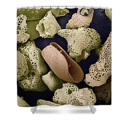 Sem Close-up View Of Foraminiferans Shower Curtain by Albert Lleal