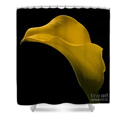 Sensuous Curves Shower Curtain by Susan Candelario
