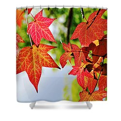 Shades Of Red Shower Curtain by Kaye Menner