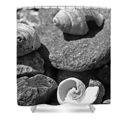 Shells I Shower Curtain by David Rucker