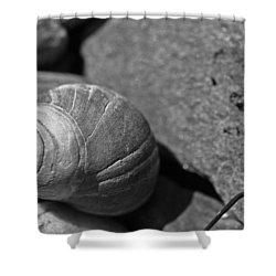 Shells II Shower Curtain by David Rucker