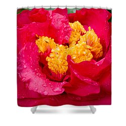 Show Off Shower Curtain by Rich Franco