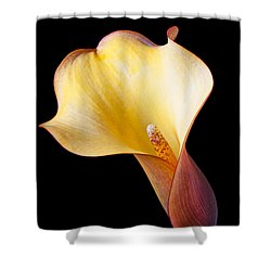 Single Calla Liliy Shower Curtain by Garry Gay