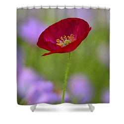 Single Red Poppy  Shower Curtain by Saija  Lehtonen