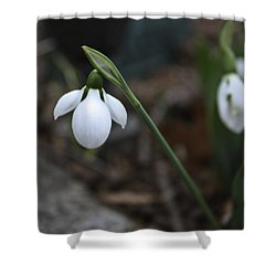 Single Snowdrop Squared 1 Shower Curtain by Teresa Mucha