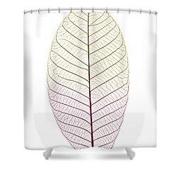 Skeleton Leaf Shower Curtain by Elena Elisseeva