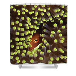 Skunk Clownfish Hiding In Anemone Shower Curtain by Beverly Factor