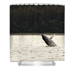 Small Breaching Whale Shower Curtain by Darcy Michaelchuk
