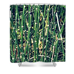 Snake Grass On The Beach Shower Curtain by Michelle Calkins
