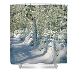 Snowy Footpath In Winter Wonderland Shower Curtain by Heiko Koehrer-Wagner