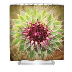 Soft As A Thistle Shower Curtain by Amy Tyler