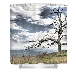Solemn Tree Shower Curtain by Michael Clubb