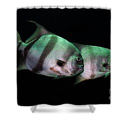 Something Fishy This Way Comes Shower Curtain by Lois Bryan