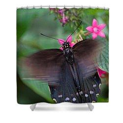 Spicebush Swallowtail Shower Curtain by Joann Vitali