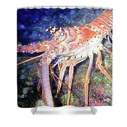 Spiney Lobster Shower Curtain by Barry Jones