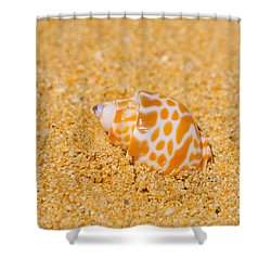 Spotted Babylon Shell Shower Curtain by Cheryl Young