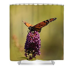 Spread Your Wings And Fly Shower Curtain by Angie Tirado