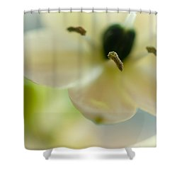 Spring Feeling Shower Curtain by Jenny Rainbow