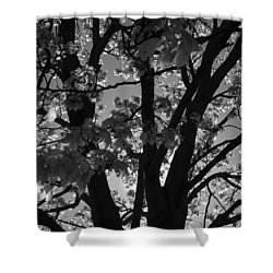 Spring Forth Shower Curtain by Lyle Hatch