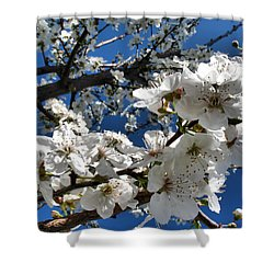 Spring Pear Blossoms 2012 Shower Curtain by Joyce Dickens