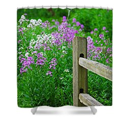 Spring Phlox 6074 Shower Curtain by Michael Peychich