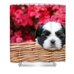 Spring Puppy  Shower Curtain by Darren Fisher