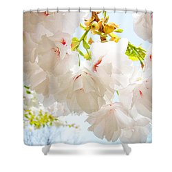 Spring White Pink Tree Flower Blossoms Shower Curtain by Baslee Troutman
