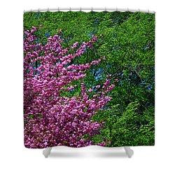 Springtime Shower Curtain by Lisa Phillips