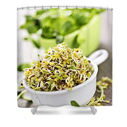 Sprouts In Cups Shower Curtain by Elena Elisseeva