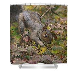 Squirrel In Fall Shower Curtain by Valia Bradshaw